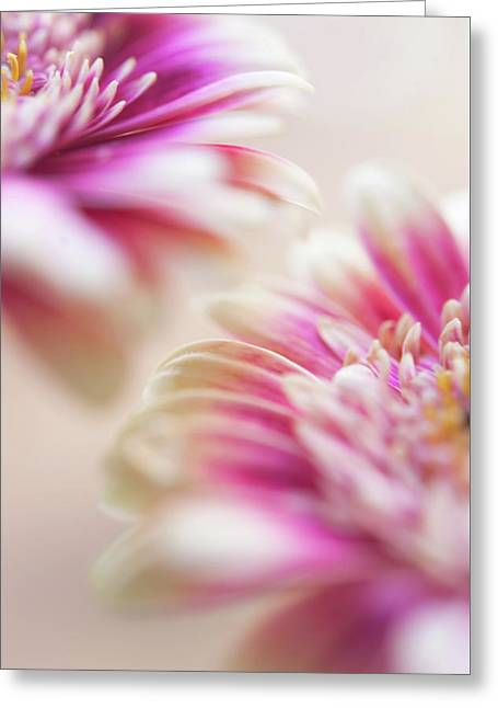 Greeting Card featuring the photograph Two Souls. Macro Gerbera by Jenny Rainbow
