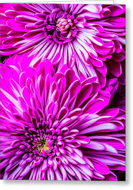 Two Spider Mums Greeting Card