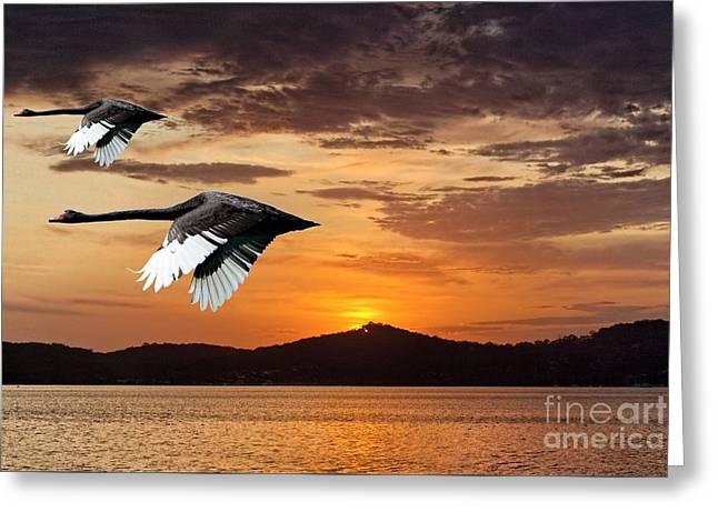 Two Swans At Dawn Art Photo Digital Download And Wallpaper