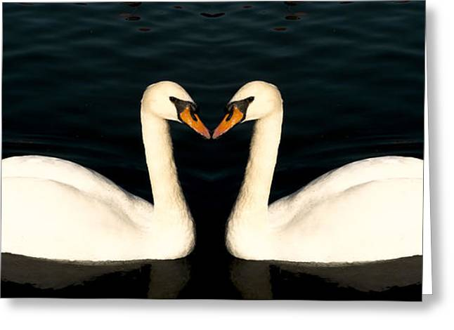 Two Symmetrical White Love Swans Greeting Card