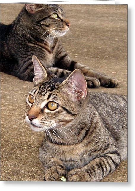 Two Tabby Cats Greeting Card by Nicole I Hamilton