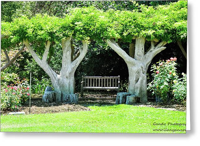 Two Tall Trees, Paradise, Romantic Spot Greeting Card