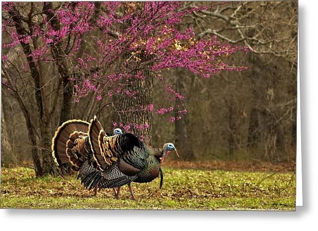 Two Tom Turkey And Redbud Tree Greeting Card
