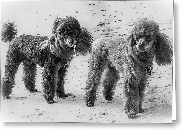 Two Toys B/w Greeting Card
