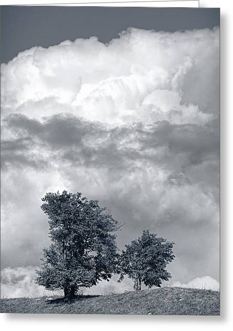 Two Trees #9249 Greeting Card