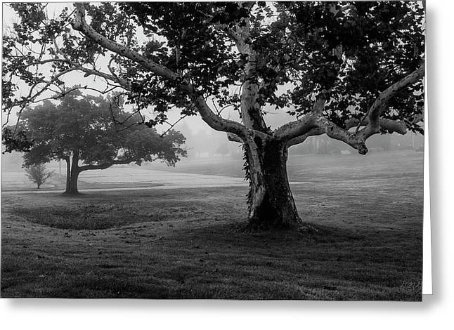 Two Trees Colt State Park Greeting Card