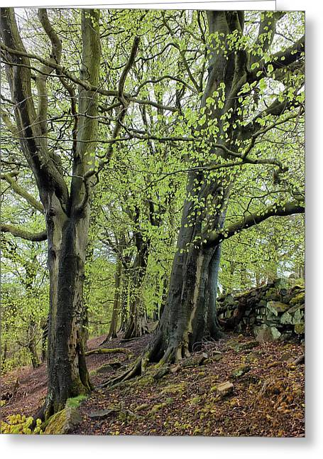 Two Trees In Springtime Greeting Card by Philip Openshaw