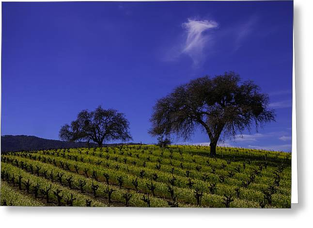 Two Trees In Vineyard Greeting Card