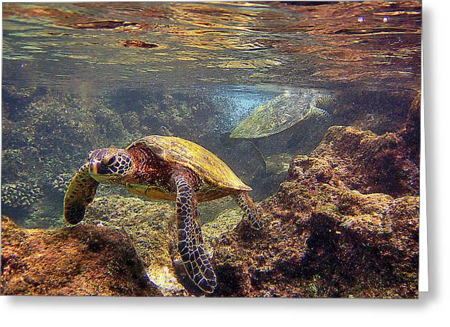 Green Sea Turtle Greeting Cards - Two Turtles Greeting Card by Bette Phelan