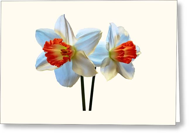 Two White And Orange Daffodils Greeting Card by Susan Savad