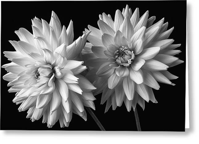 Two White Dahlias Greeting Card by Garry Gay