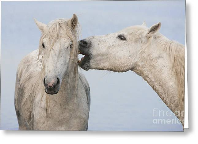 Two White Horse Friends Greeting Card