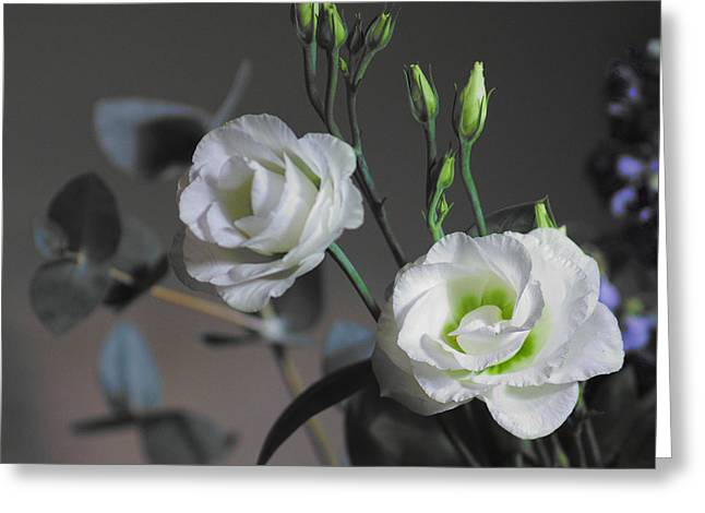 Greeting Card featuring the photograph Two White Roses by Jeremy Hayden