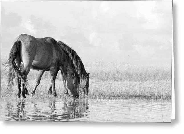 Two Wild Mustangs Greeting Card