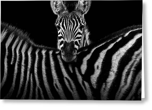 Two Zebras In Black And White Greeting Card