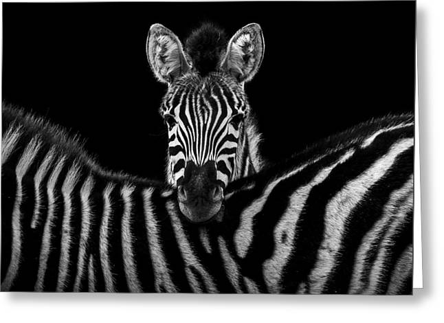 Two Zebras In Black And White Greeting Card by Lukas Holas