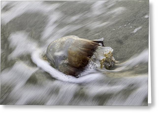 Tybee Isalnd Jellyfish Greeting Card