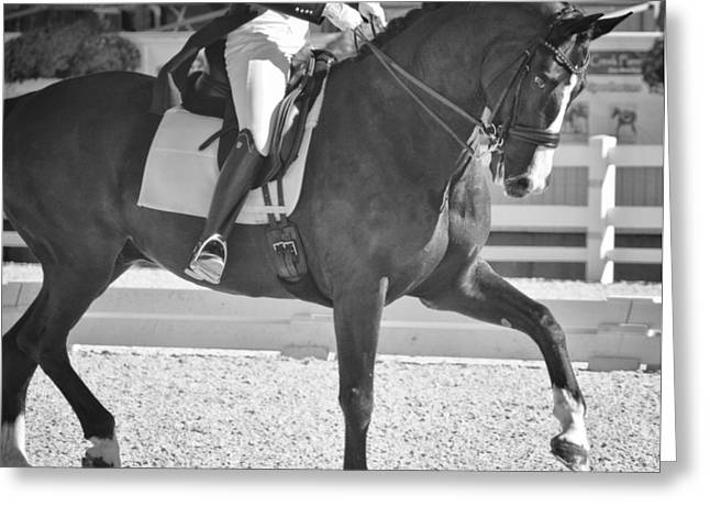 Greeting Card featuring the photograph Ultimate Collection by Dressage Design