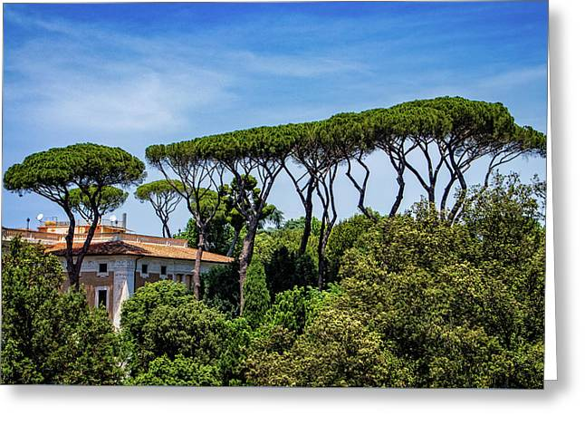Umbrella Trees In Rome Greeting Card