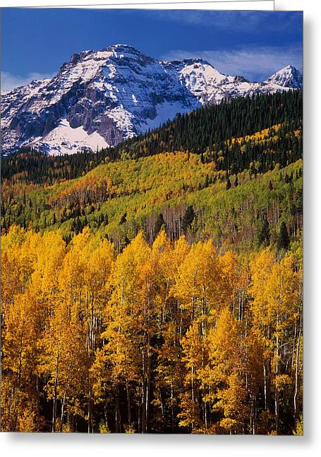 Uncompahgre National Forest Co Usa Greeting Card