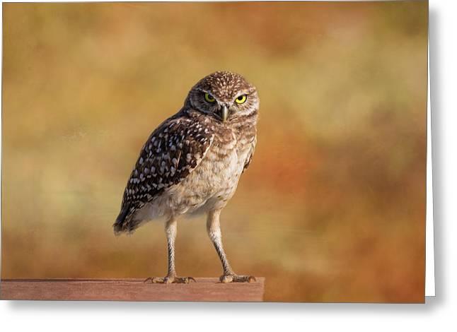 Under A Watchful Eye Greeting Card by Kim Hojnacki
