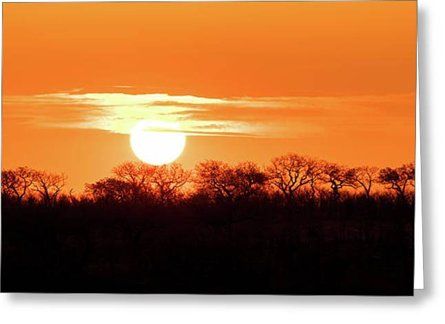 Under African Skies Greeting Card by Jane Rix