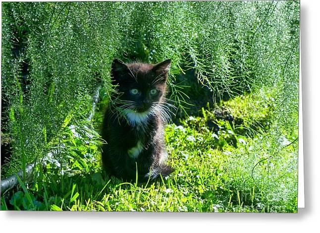 Kitten Under The Asparagus Ferns Greeting Card