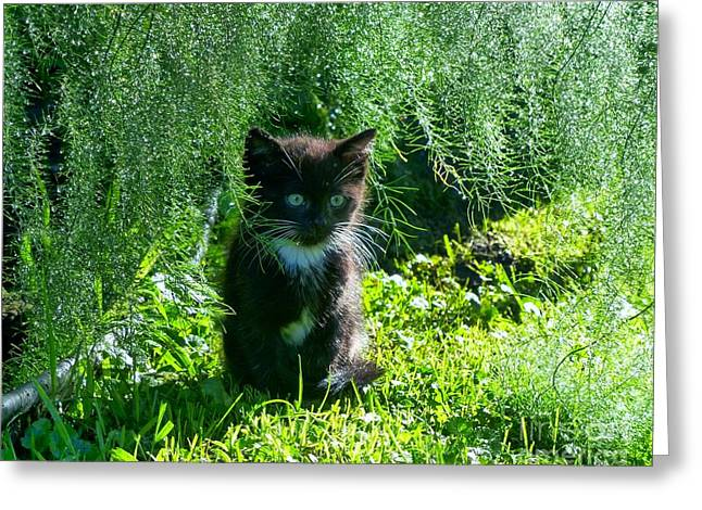 Kitten Under The Asparagus Ferns Greeting Card