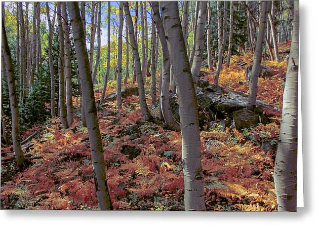 Under The Aspens Greeting Card