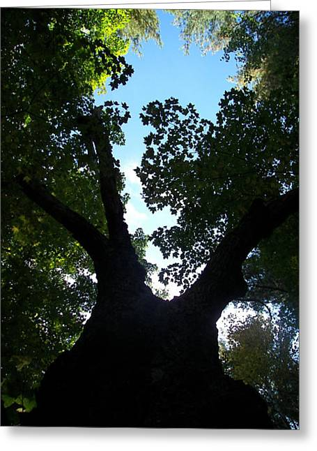 Under The Big Tree Greeting Card by Jess Kielman