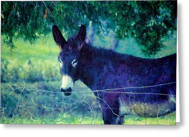 Under The Cedar Greeting Card by Jan Amiss Photography