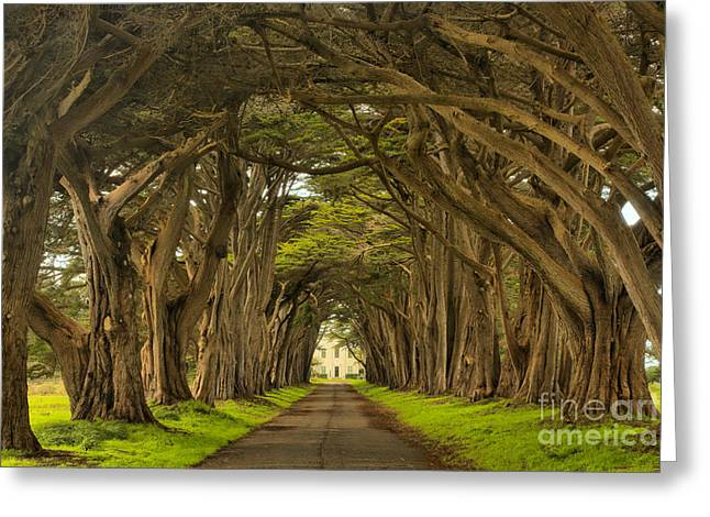 Under The Cypress Canopy Greeting Card by Adam Jewell