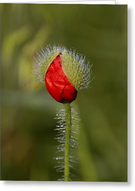 Under The Morning Dew Greeting Card