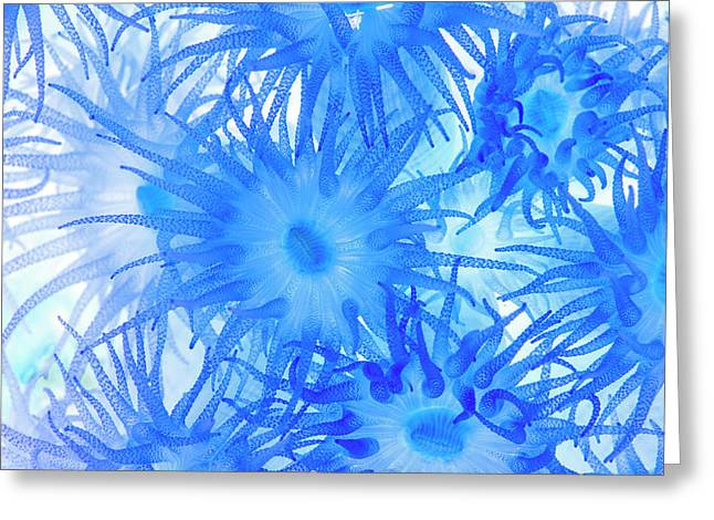 Greeting Card featuring the photograph Under The Sea Colorful Watercolor Art #14 by Debra and Dave Vanderlaan