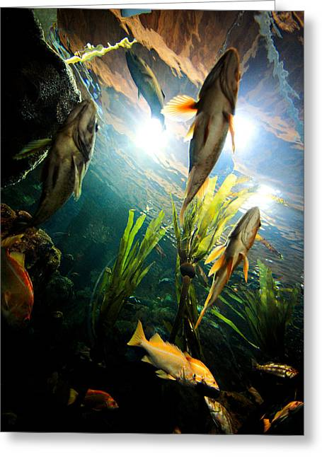 Under The Sea Greeting Card by Todd Klassy