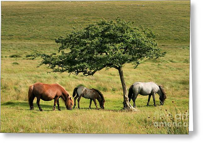 Under The Shade Greeting Card by Carl Whitfield