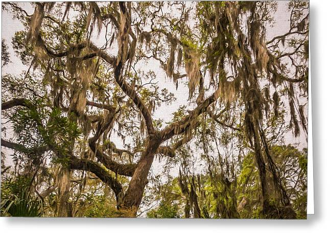 Under The Shade Of A Live Oak - Artistic Greeting Card by Chris Bordeleau