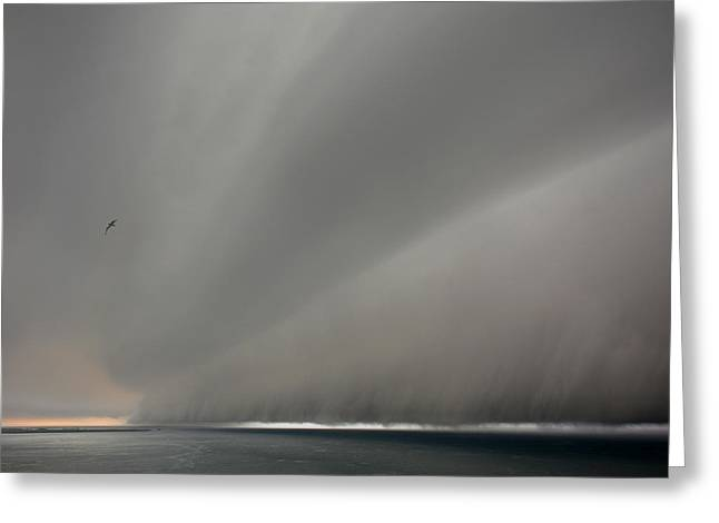 Under The Weather With Fleeing Gull Greeting Card by Paul Davenport
