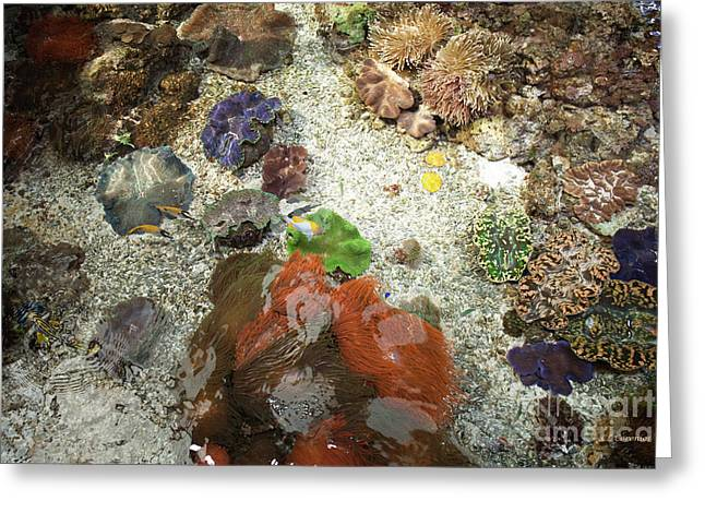 Greeting Card featuring the photograph Under Water Life by Carol Lynn Coronios