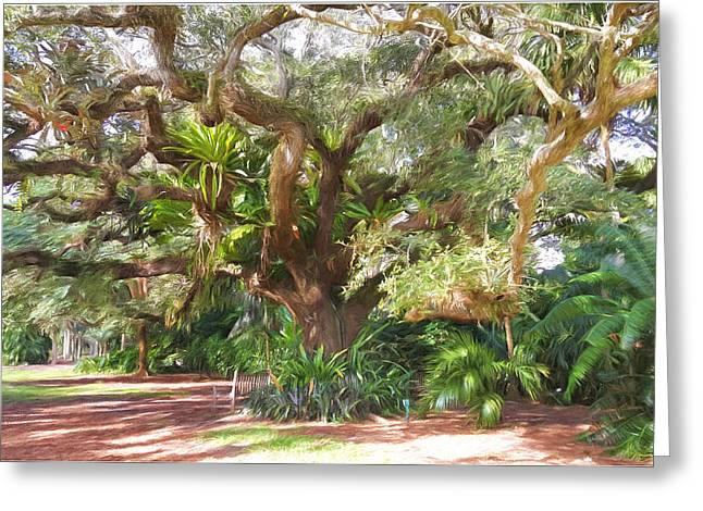Underneath The Tree At Fairchild Troplical Garden Greeting Card by Edier C