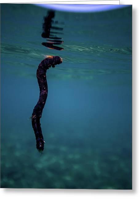Underwater Branch Greeting Card