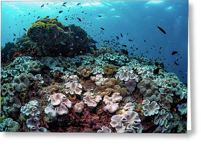 Underwater Community Greeting Card by Shane Linke