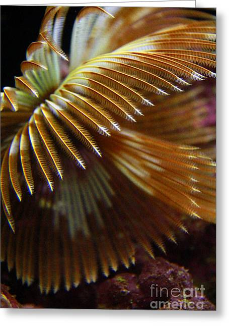 Underwater Feathers Greeting Card