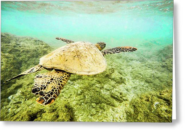 Underwater Flight Greeting Card by Peter Irwindale