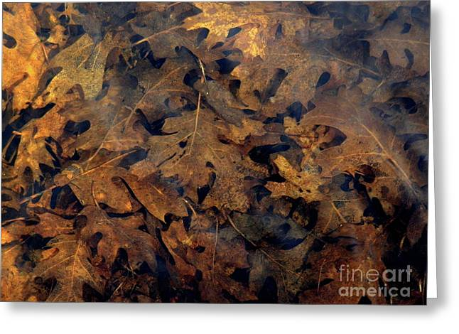 Underwater Leaves Greeting Card by Robert Ball