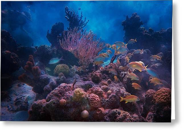 Underwater Paradise Greeting Card by Betsy Knapp