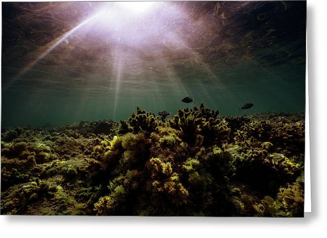 Underwater Sunset Greeting Card