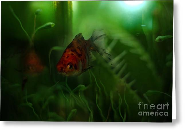 Underwater World Greeting Card by Angel  Tarantella