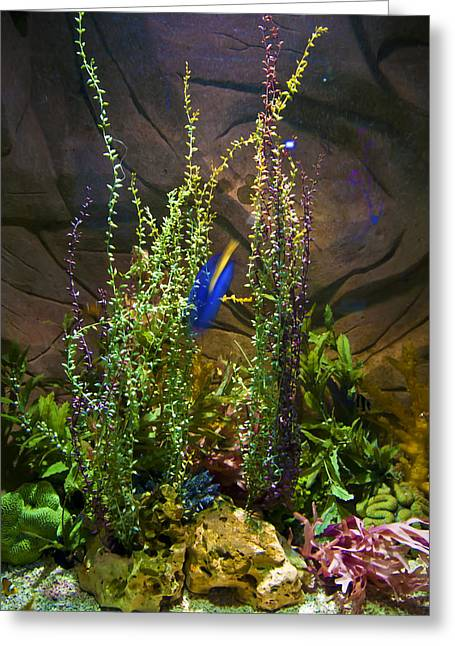 Underwater03 Greeting Card by Svetlana Sewell