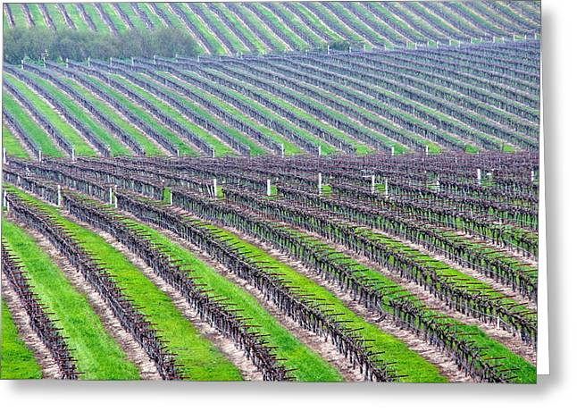 Undulating Vineyard Rows Greeting Card